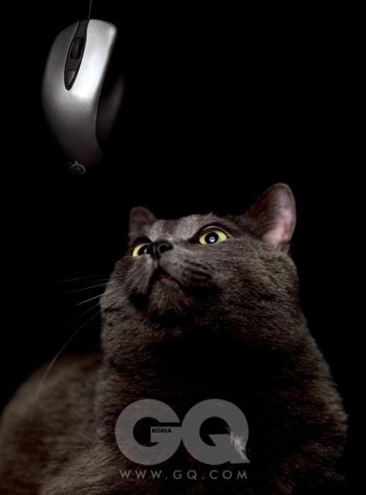 눈을 뒤집고 노려보고 있는 마우스 이카리 옵티컬은 6만원대 후반, 스틸시리즈.