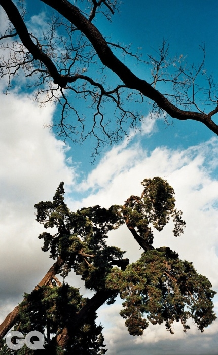 회화나무와 향나무완연한 고태를 풍기는 수종으로서 회화나무와 향나무는 각각 활엽수와 침엽수의 대표쯤 된다. 한 뼘이 자라더라도 붓으로 친듯한 회화나무의 선과한 오백 년을 살아도 우악스레 뻗대는 법이 없는 향나무의 선은 그 자체로 시간을 압축해 놓는다.<대련 003> 2012.