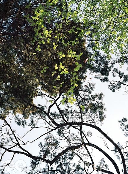 향나무와 팥배나무향나무 아래 팥알만 한 열매가 지천이라 갸우뚱했더니, 향나무의 것이 아니라 바로 옆 팥배나무가 떨군 것이었다. 만져보면 아직도 과육이 실하다. 떫고 시큼해서 사람보다는 산새가 좋아하는 열매지만 말이다. 그런가 하면 향나무는 제 몸을 둥글려 아예 회오리를 묘사한다. <대련 018> 2014.