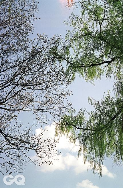 졸참나무와 버드나무참나무는 흔하다. 그도 그럴 것이, 참나무는 상수리나무, 굴참나무, 신갈나무, 갈참나무, 졸참나무, 떡갈나무를 두루 부르는 말이기 때문이다. 졸참나무는 참나무 중에서도 잎이 가장 작다. 이제 막 잎을 틔웠으니 더더욱 그렇다. 버드나무도 아직은 잎이 어려 보인다.<대련 007> 2014.
