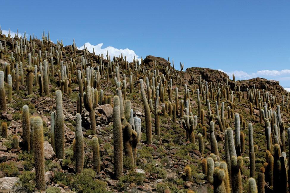 326GQB-볼리비아의 하늘-W-7