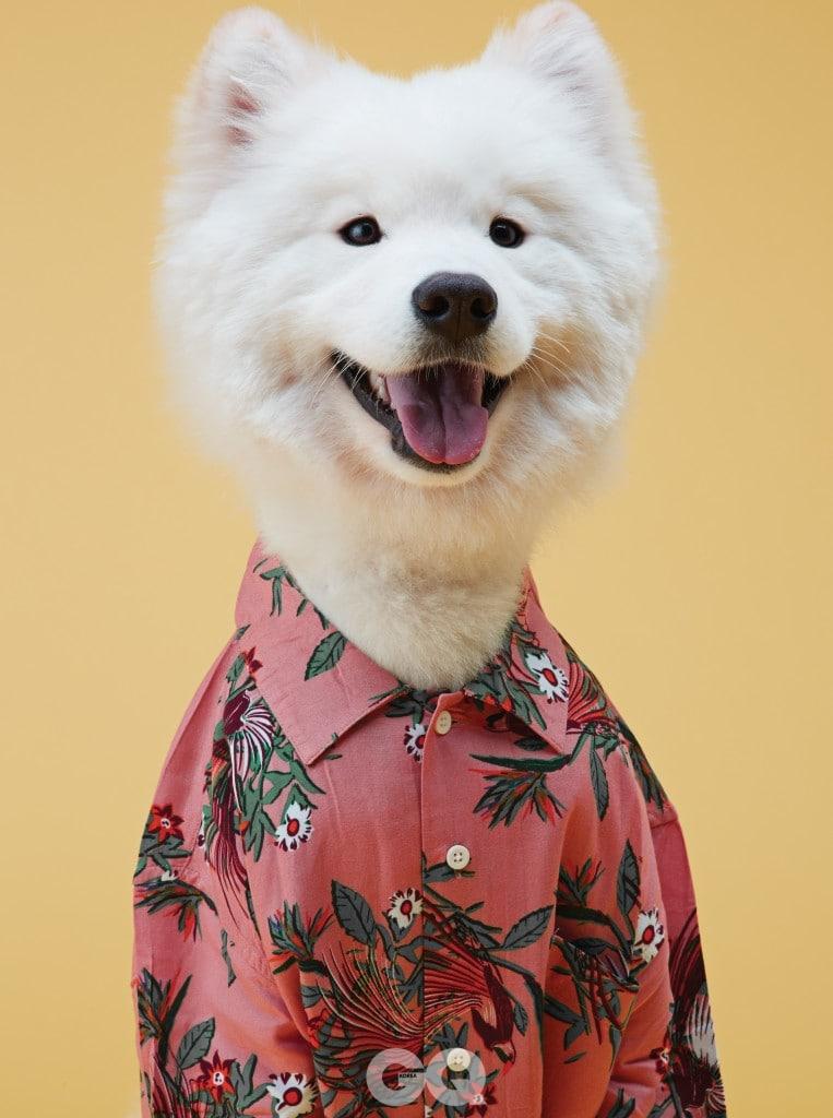 사모예드 베라 ㅣ 남국의 꽃으로 화려하게 장식한 분홍 하와이안 셔츠 8만6천원, 오베이 by 웍스아웃.
