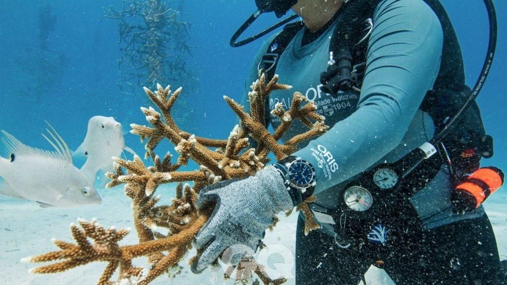 산호복구재단의 멤버가 오리스 스태그혼 레스토레이션 한정판을 착용하고 산호 복구 활동을 펼치고 있다.