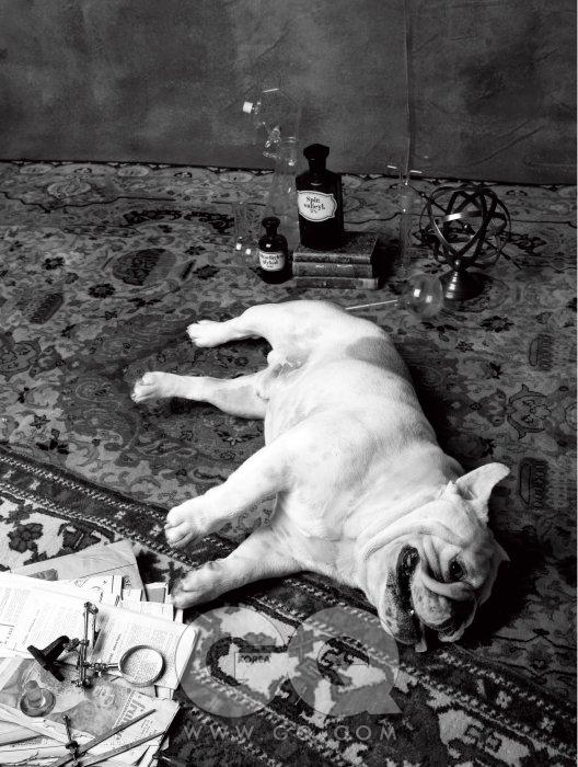 Bulldog 왓슨의 애견이지만 주된 역할은 홈즈의 실험 대상. 기절해 있을 때가 더 많다.