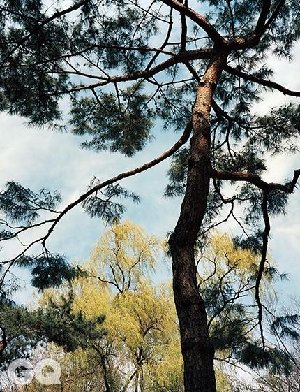 소나무와 버드나무낙락장송 한 그루의 풍모는 실로 여러 계절을 함축한다. 언제나 같은 모습일지언정, 결코 딱딱하게 붙박히지 않으니, 봄에는 봄나무요, 겨울에는 겨울나무다. 한편 버드나무는 멀어도 그만, 가까워도 그만이다. 어디에 있든 그걸 보는 순간 우리는 관조의 세계로 진입하는 것이다. <대련 039> 2014.