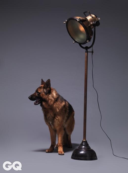 영화 촬영 조명 같은 플로어스탠드 '스팟 브라스'. 184cm, 2백19만원, KARE. 저먼 셰퍼드의 이름은 쌤.