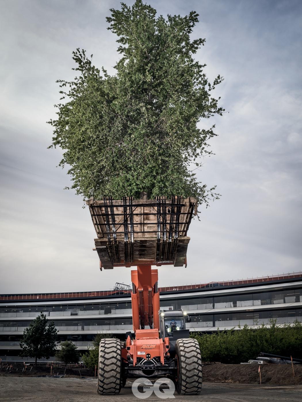 """나무 배달 """"잡스에게 나무는 아름다운 예술 작품과 다름없다""""고 건축가 스테판 베링이 말했다. """"스티브는 '아무리 부자라도 오래되고 아름다운 나무는 살 수 없다는 점 때문에 나무가 멋집니다'라고 말하곤 했습니다."""""""